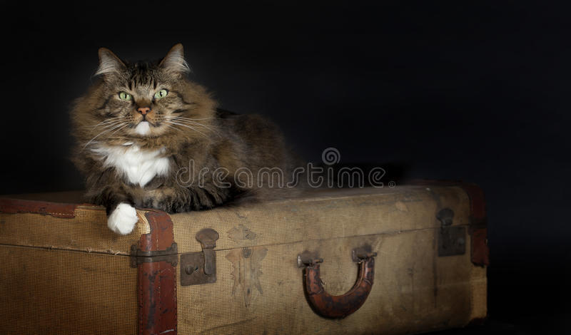 Cat Laying Vintage Suitcase imagens de stock royalty free