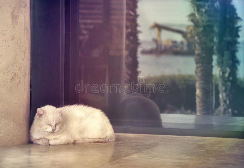 Cat lies on the cafe window royalty free stock photos