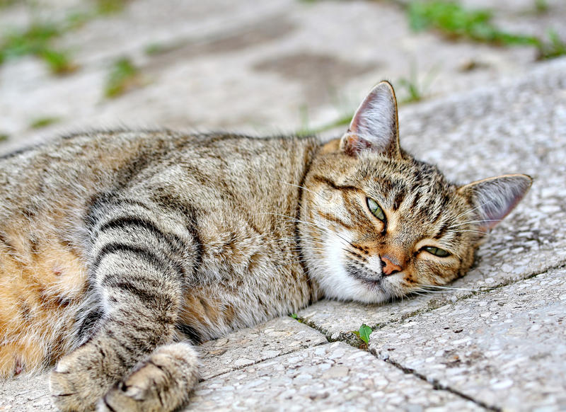 Download Cat Lies On The Floor Outdoor Stock Image - Image of indolence, pets: 39500335