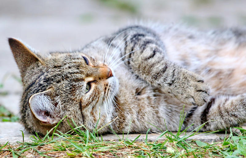 Download Cat Lies On The Floor Outdoor Stock Photo - Image of floor, kitten: 39500988