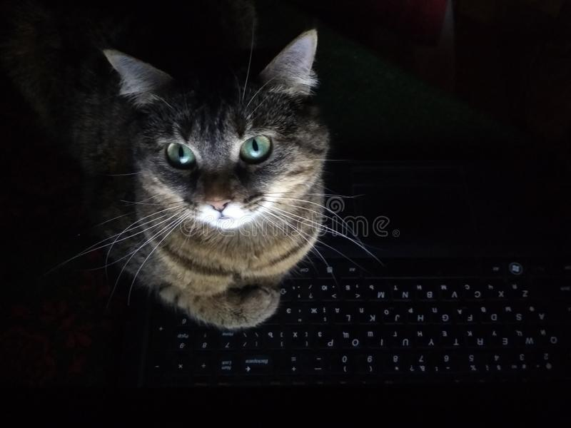 The cat lies in front of a computer monitor. Illuminated by the light of the display in the dark stock images