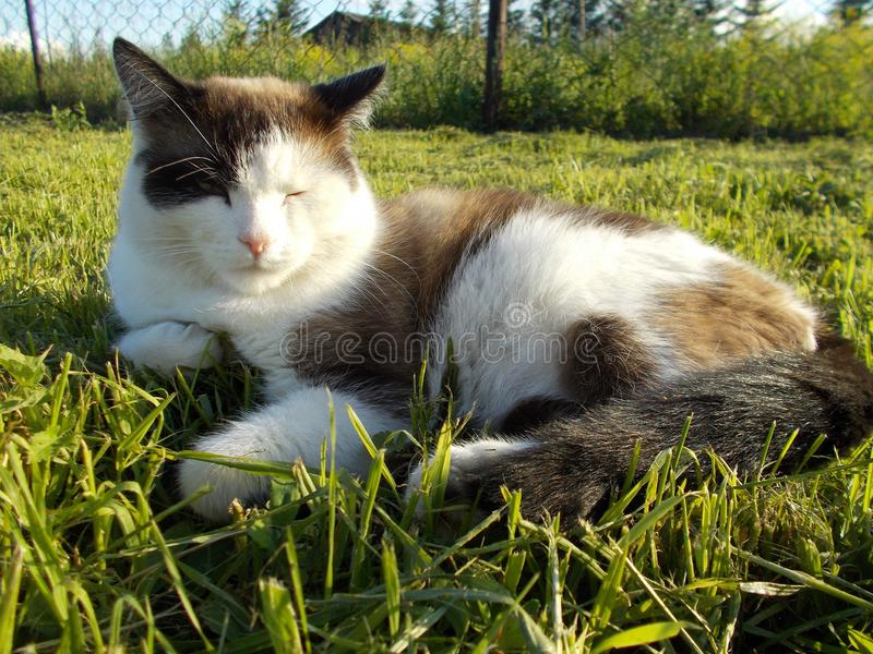 The cat lies on the green grass stock photos