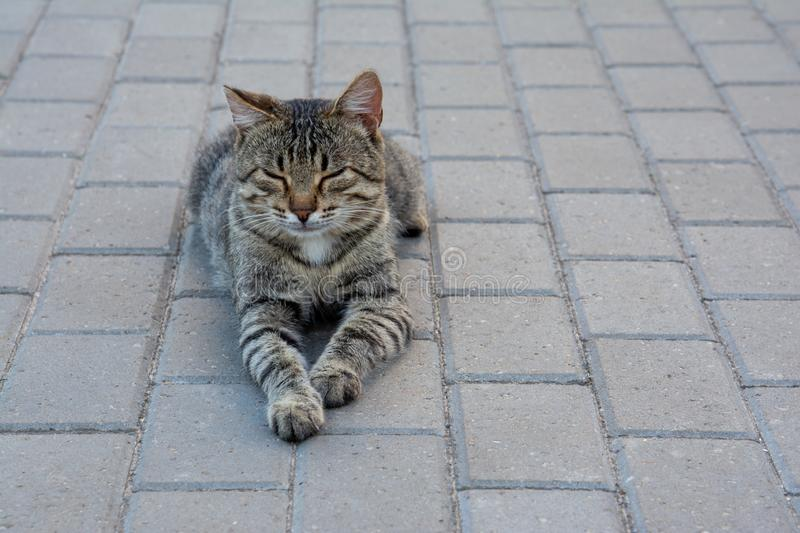 My life is beautiful at any time. The cat lies with his eyes closed on the road royalty free stock images