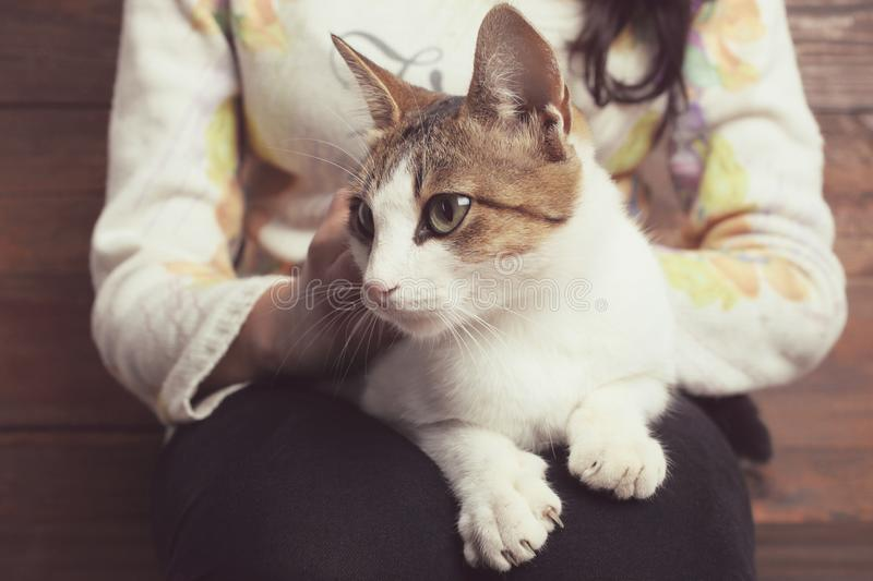 Cat lies on the lap of a girl stock image