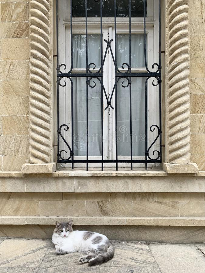 The cat lies under the window against the wall of a house on Kichika Gala street in the old town of Icheri Sheher. Azerbaijan, Bak. U city royalty free stock photography