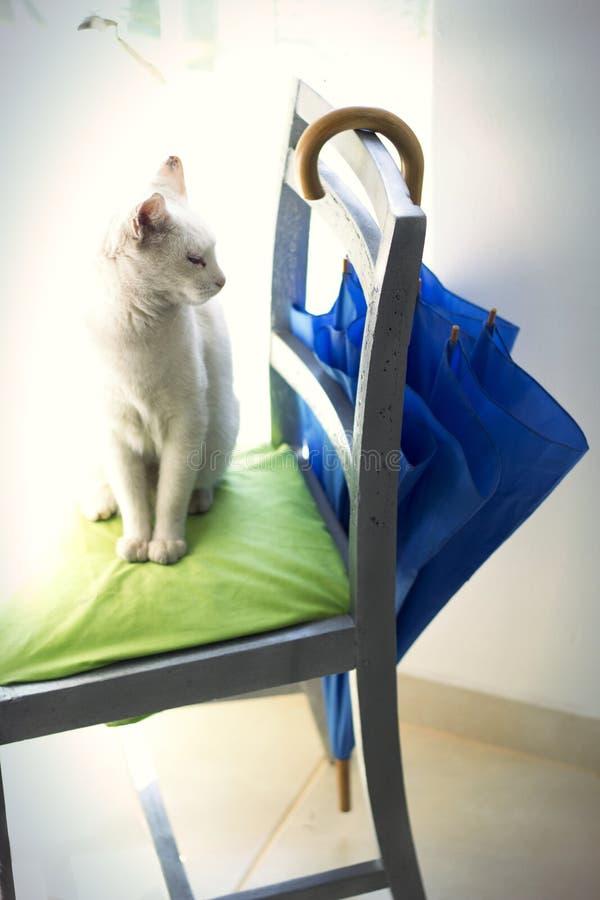 Cat Like Posture stockfotos