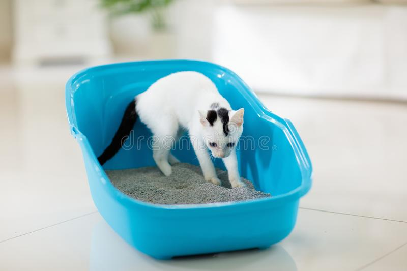 Cat in litter box. Kitten in toilet. Home pet care stock image