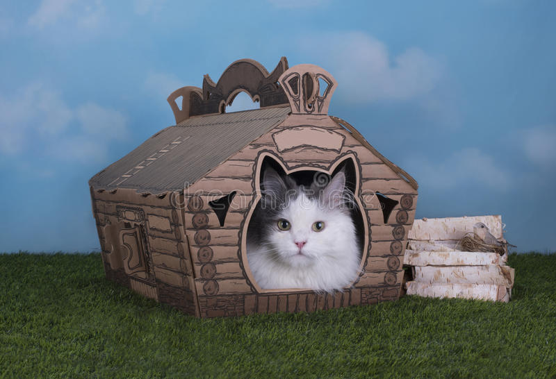 Cat lives in his own house in the village.  stock images