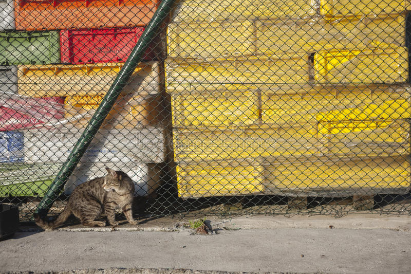 Cat living in port. Portrait of a homeless cat living in port royalty free stock photo