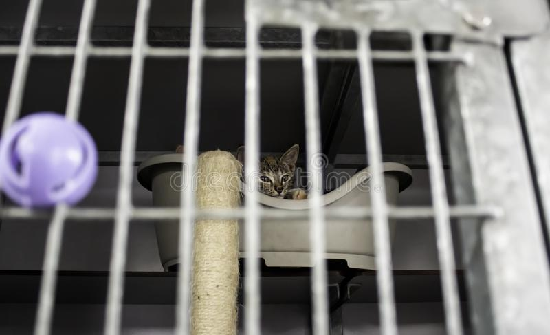 Cat locked cage. Animal abuse and loneliness, pets, scared, zoo, look, lost, metal, young, iron, wild, shelter, adoption, paws, tabby, steel, wildlife, cats stock image