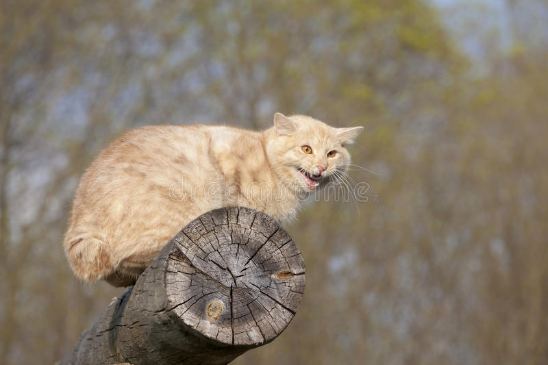 Cat On A Log Royalty Free Stock Photography