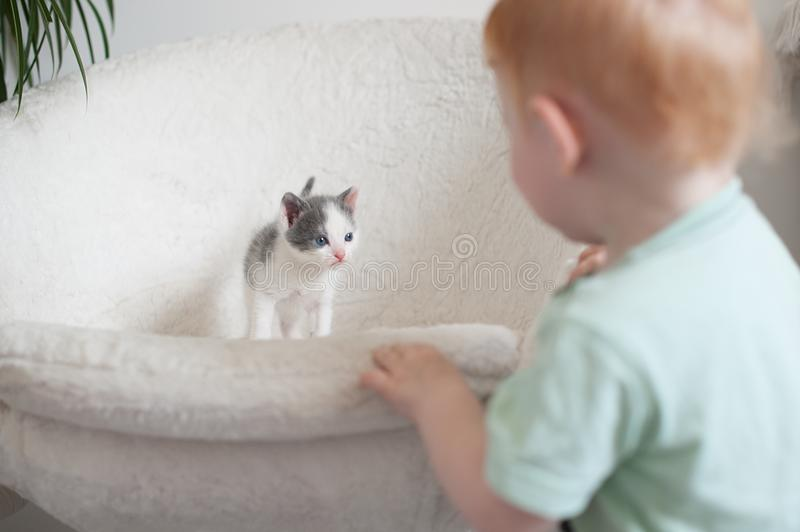 Cat look at the baby stock images