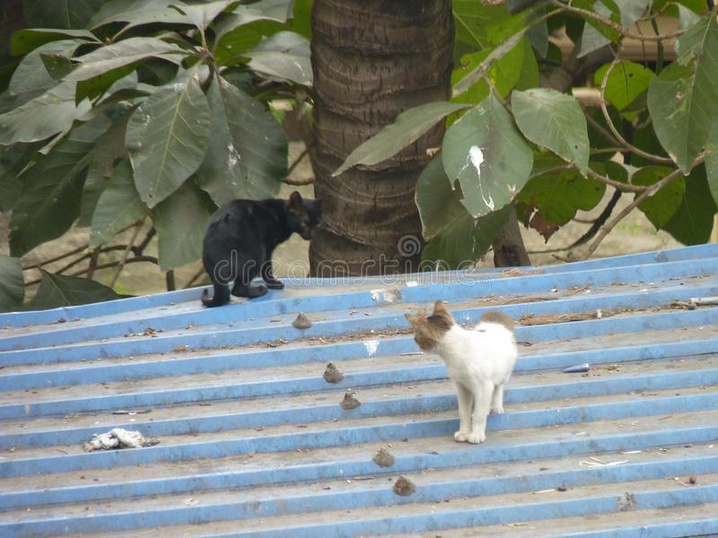 Cat look for intimacy.dhaka bangladesh. On the ist floor with tree royalty free stock photography
