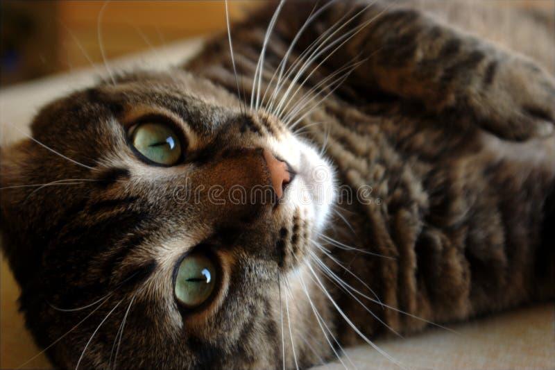 Cat looking stock image