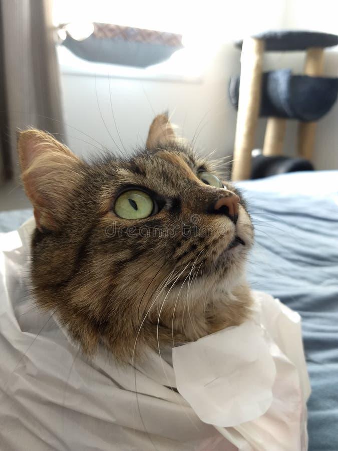 Cat Looking royaltyfri fotografi