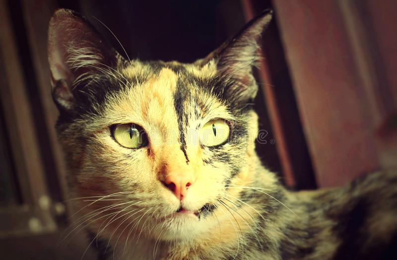 Cat Looking stock foto