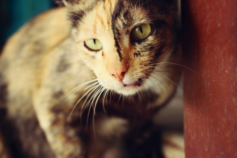 Cat Looking stock foto's