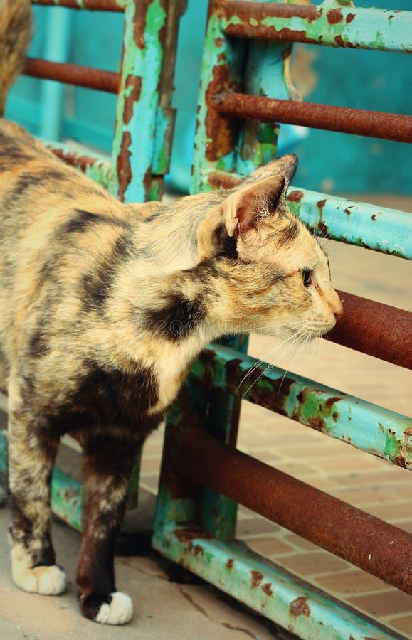 Cat Looking royalty-vrije stock afbeelding
