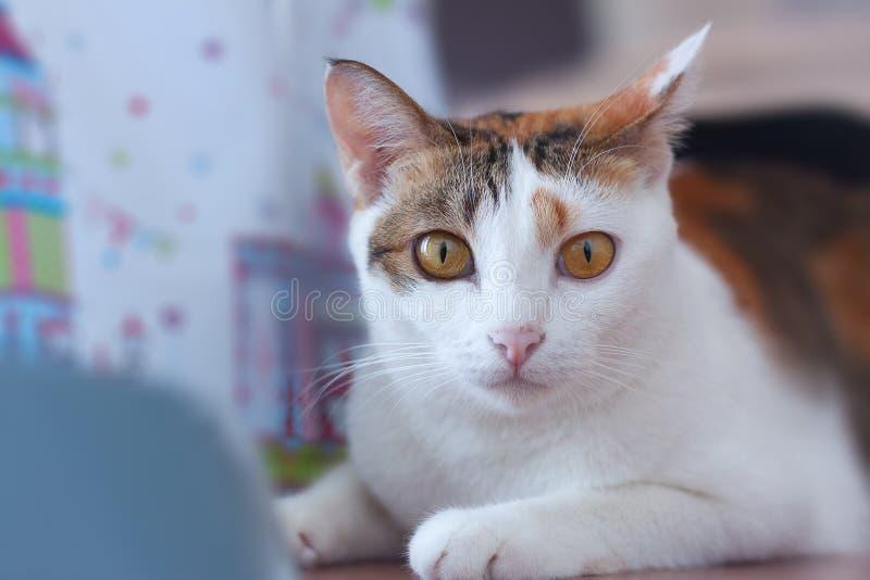 Cat Looking photos libres de droits