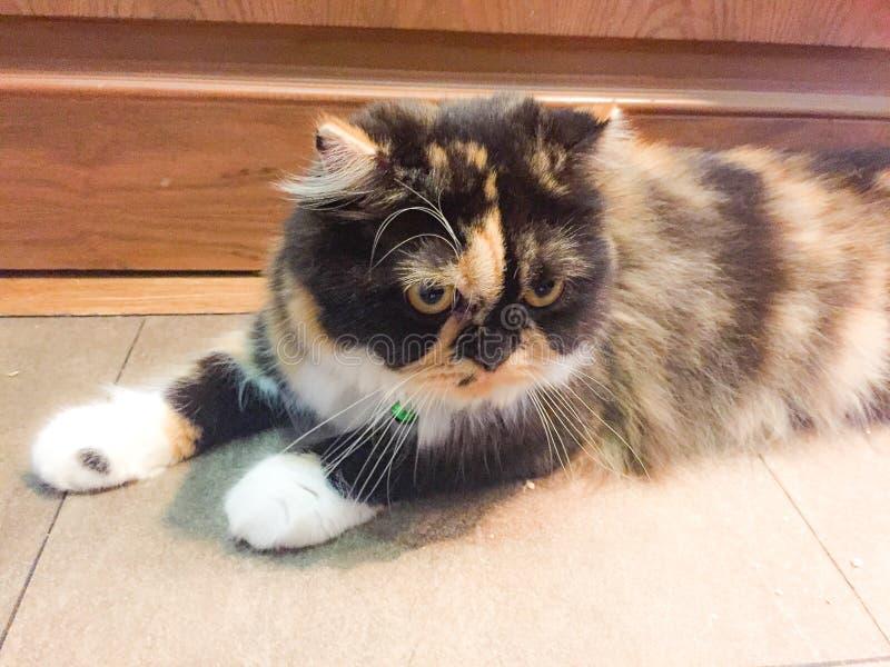 Cat Looking algo fotos de archivo