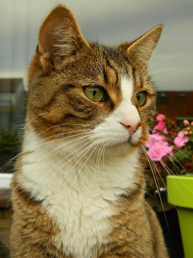 Cat Looking Away photo stock