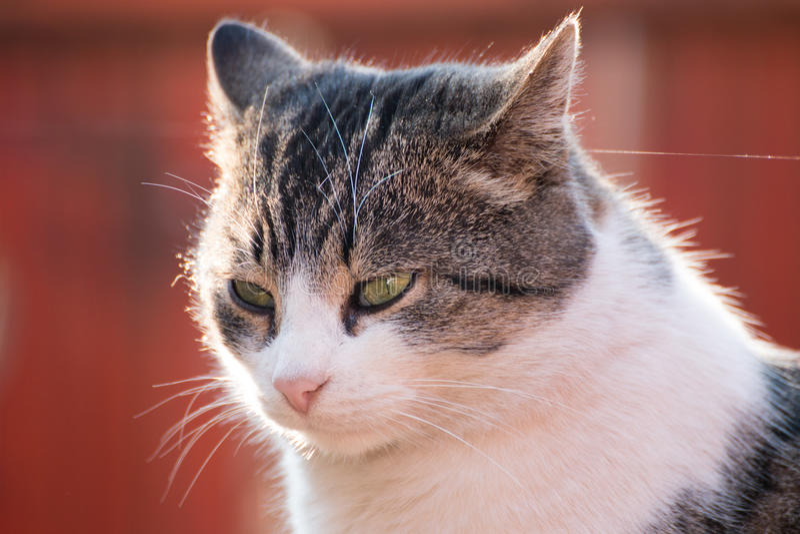 Cat Looking Away Portrait stock afbeelding