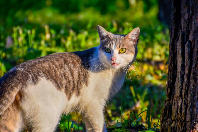 Cat looking back. Cat walking and looking back for will be not noticed royalty free stock photos