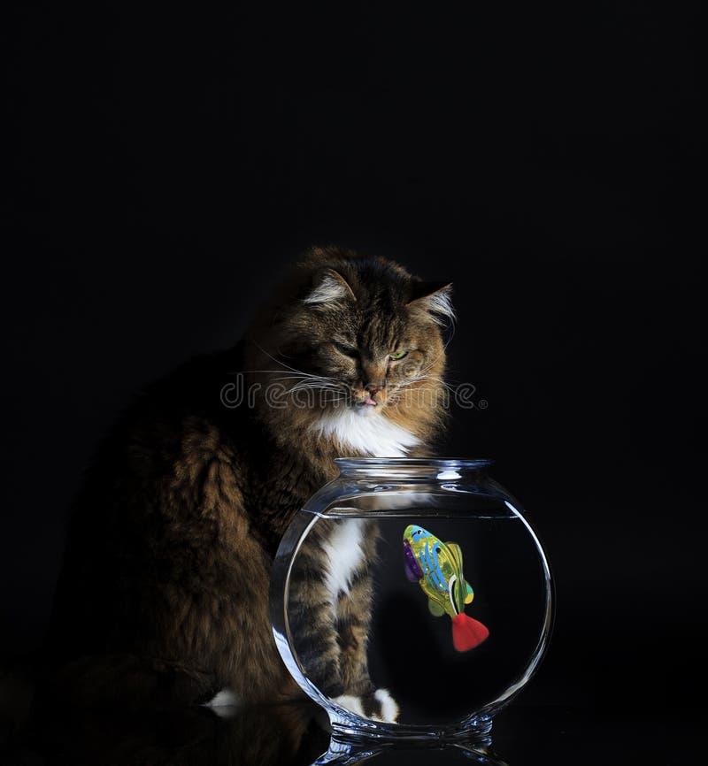 Cat Looking bei Fishbowl lizenzfreie stockfotografie