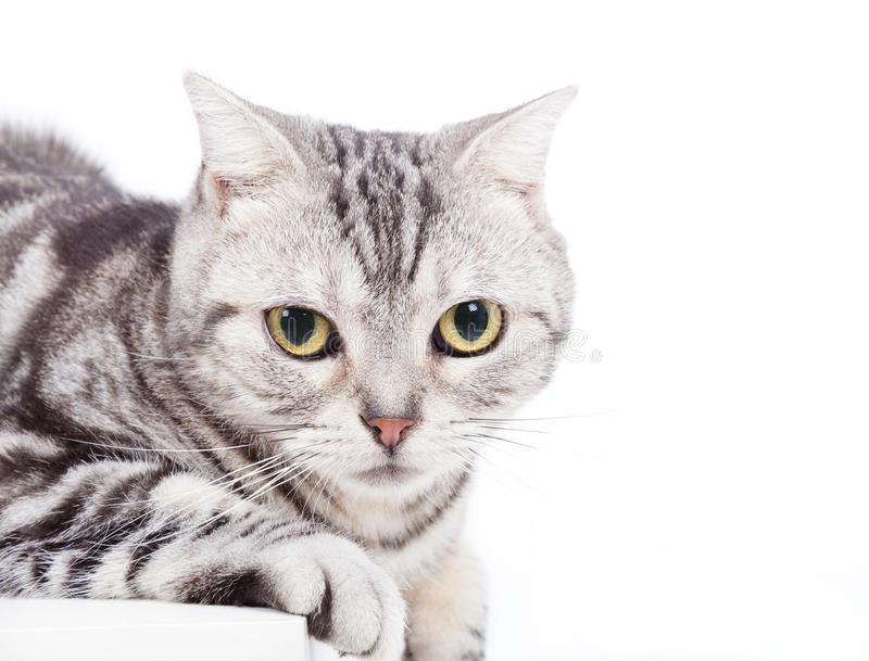 Download Cat looking at camera stock photo. Image of sitting, floor - 28729214