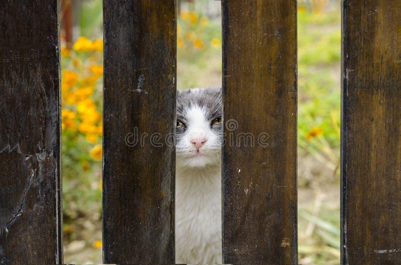 Cat royalty free stock photos