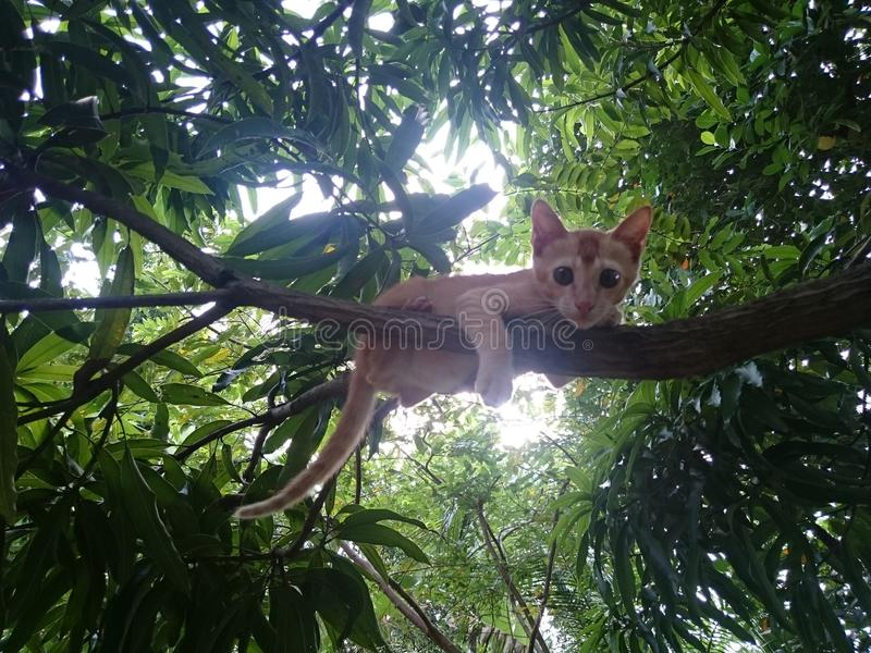Cat on a tree royalty free stock photography