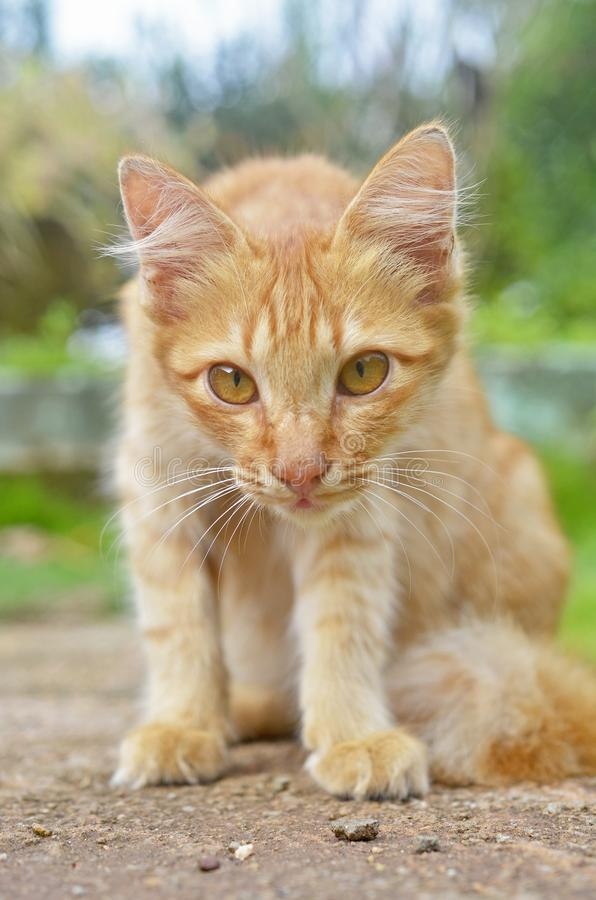 A cat looking with curious face royalty free stock photos