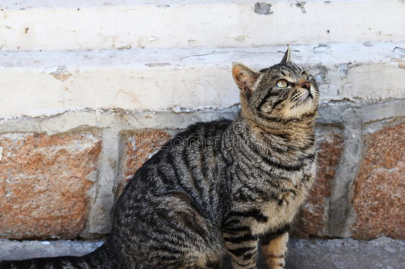 Cat looking forward to finding food. Cats, belonging to felines, are divided into domestic cats and wild cats and are the most widely used pets in the world. The stock photo