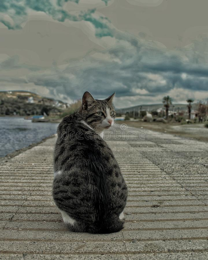 The cat is looking its back royalty free stock photos