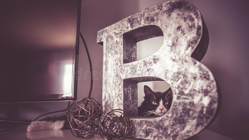 Cat looking through letter B stock photos