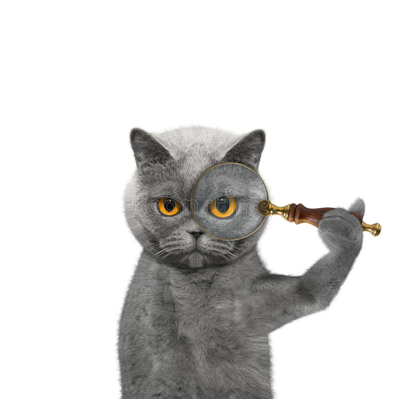 Cat looking through a magnifying glass magnifier royalty free stock photos