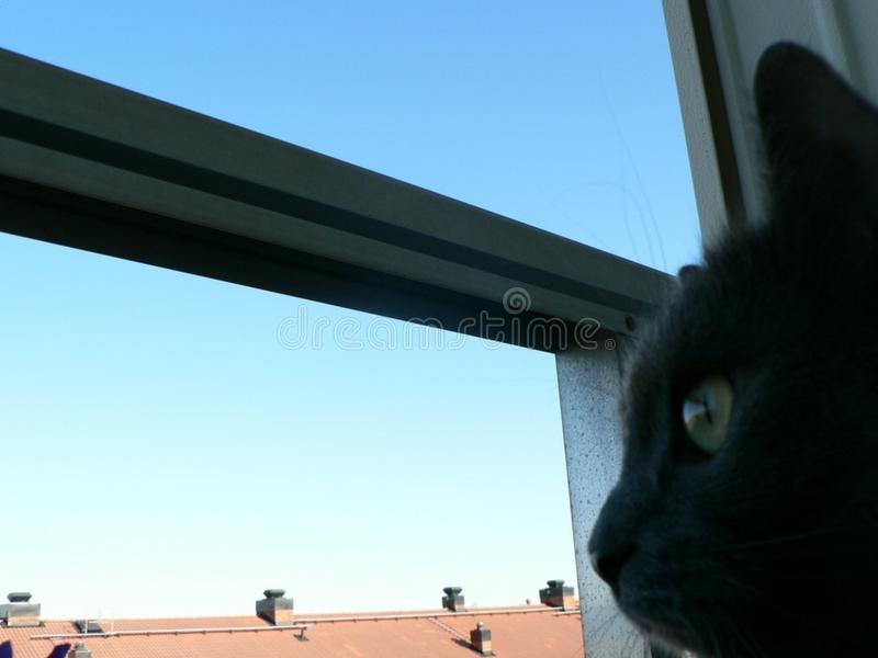 Cat Looking Out royalty free stock photo