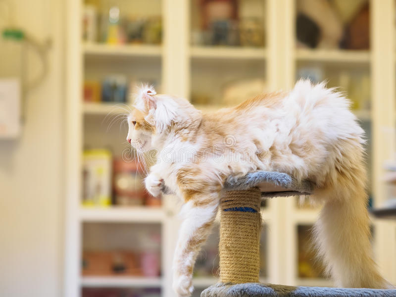 Cat looking out royalty free stock photos