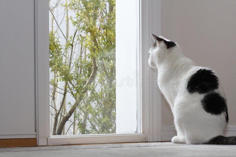 Cat Looking Out a Window royalty free stock photo