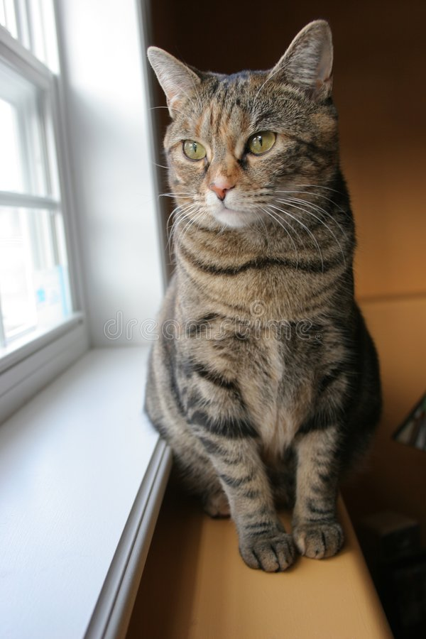 Download Cat Looking out Window stock photo. Image of look, stare - 613694