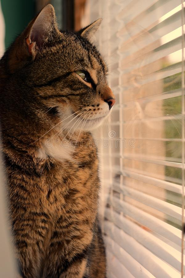 Cat looking out the window stock image