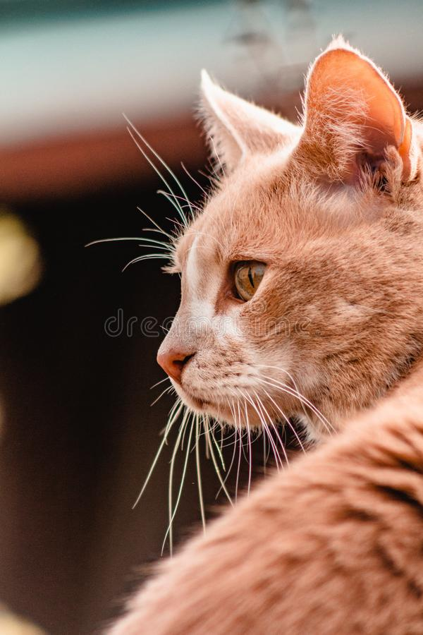 Cat looking over shoulder into sunset stock photos