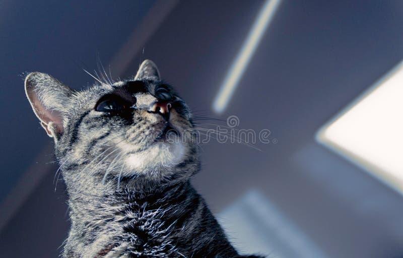 Cat looking shadows royalty free stock photos