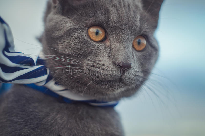 Cat looking to the see royalty free stock image