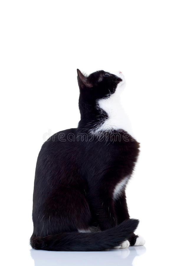 Download Cat looking up stock image. Image of copy, looking, funny - 17967375