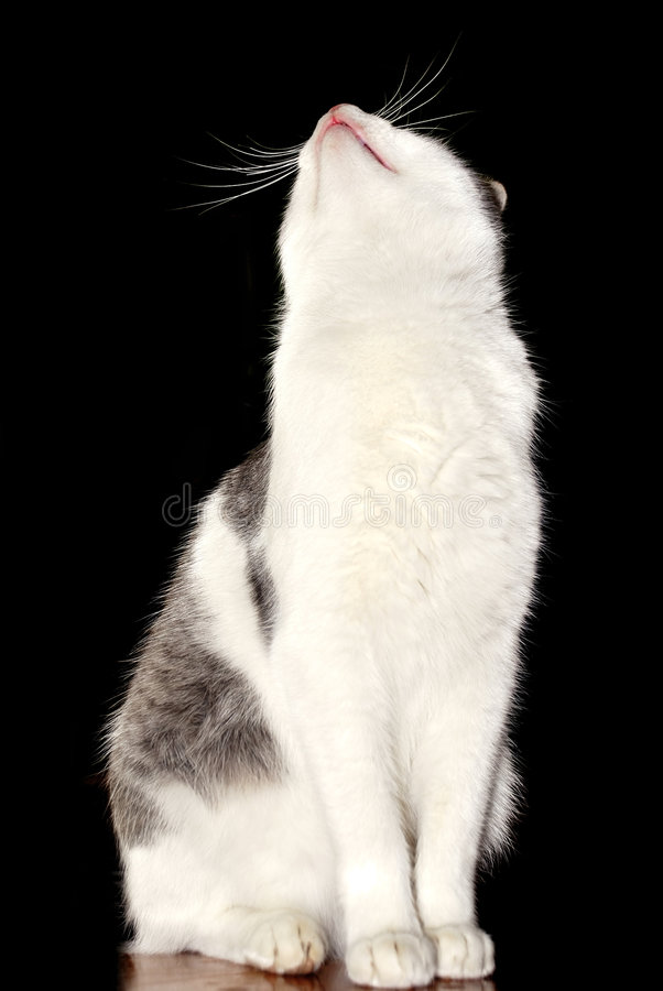 Download Cat looking up stock image. Image of hope, dark, floor - 7479499