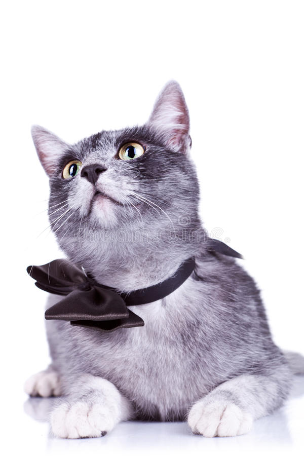 Download Cat Looking Up To Something Stock Image - Image: 21821847