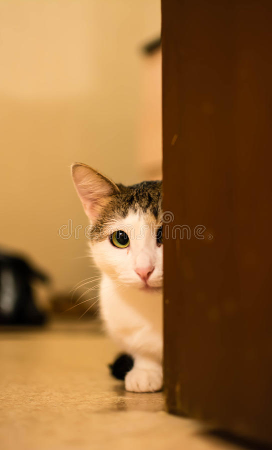 The cat looking at you. Toned photo. royalty free stock photo