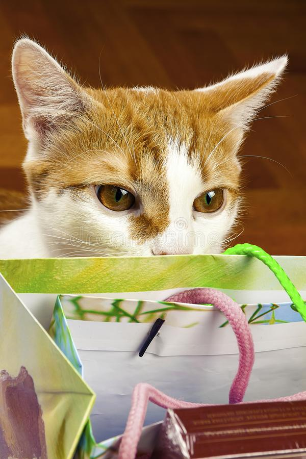 The cat looks on in a bag with gifts royalty free stock image