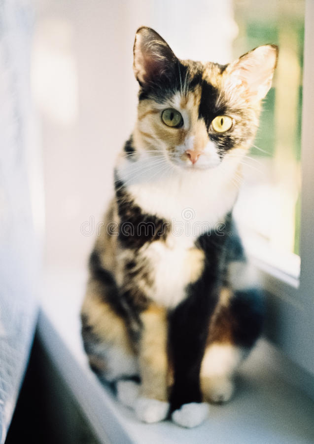 Cat looks royalty free stock photography